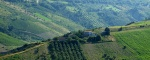 Fabbricato rurale da ristrutturare